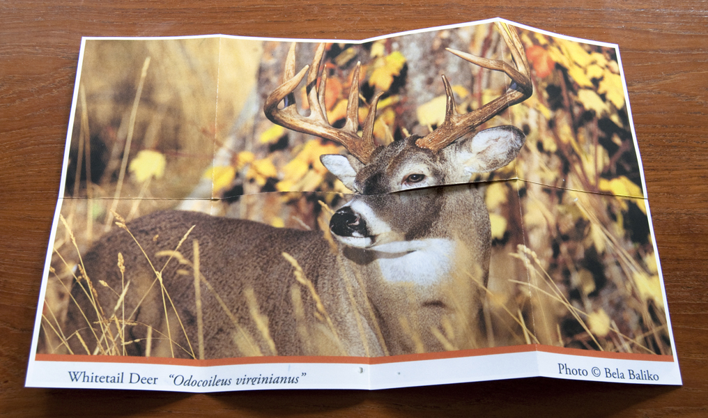 http://lexthompson.com/files/gimgs/20_20-deer-blind-artist-book-unfolded-verso.jpg