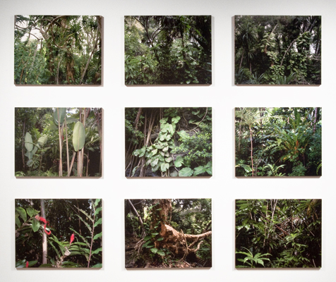 Jungle grid